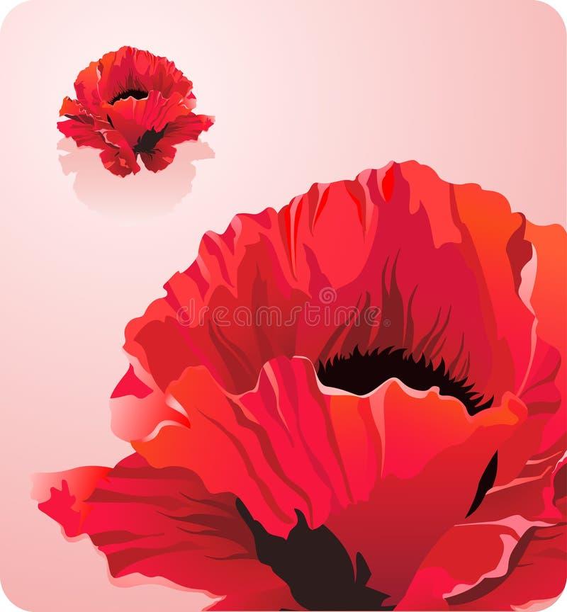 Belles forces rouges de fleur de pavot de thème de nature illustration stock