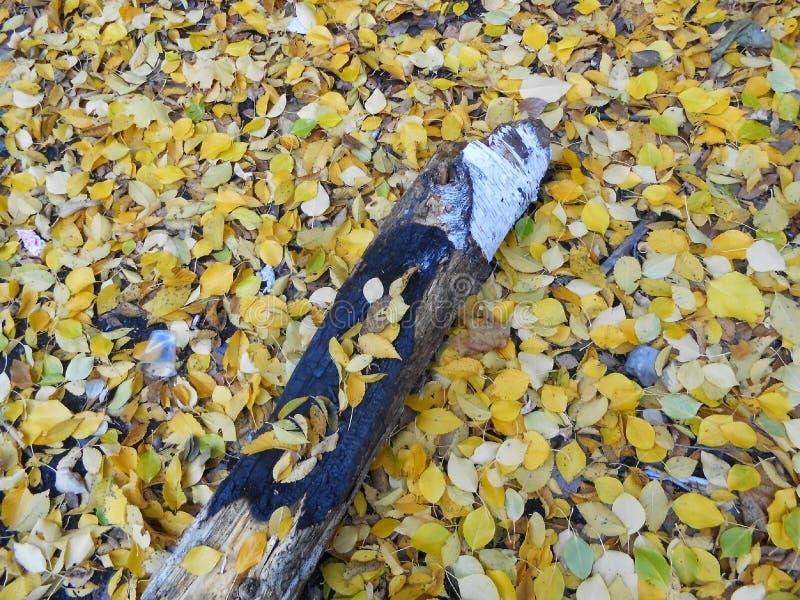 Belles lames d'automne images stock