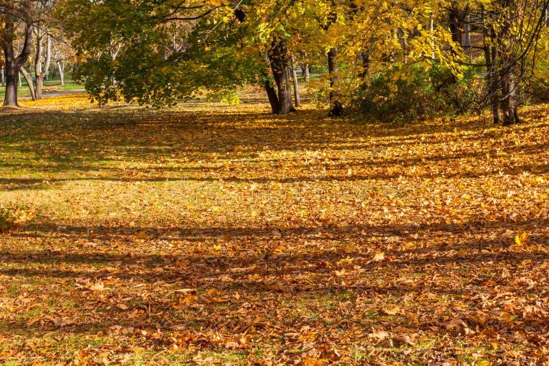 Download Belles Lames D'automne Colorées Photo stock - Image du écologie, outside: 56476894