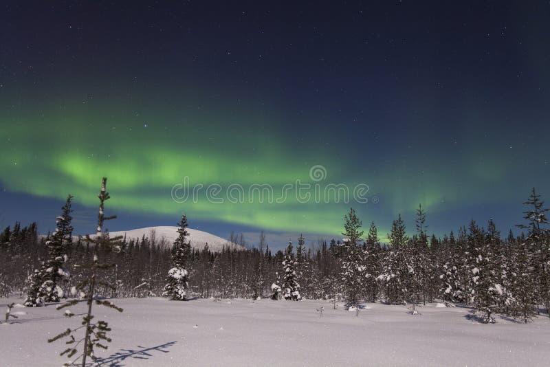 Belles lumières du nord au-dessus de forêt et de tre couvert de neige photo libre de droits