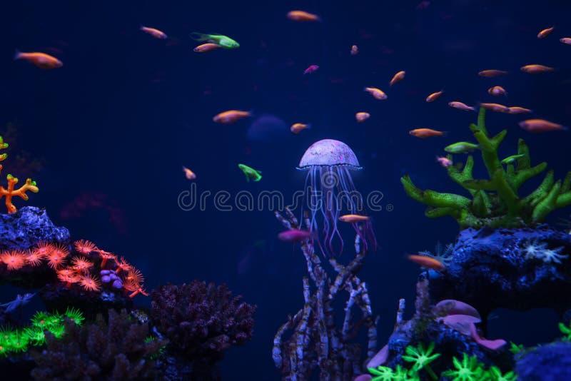 Belles méduses sous l'eau image libre de droits