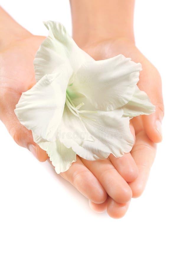 Belles mains de femme avec une fleur tropicale blanche images libres de droits