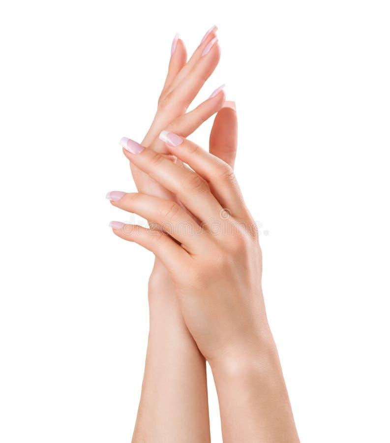 Belles mains femelles photo stock