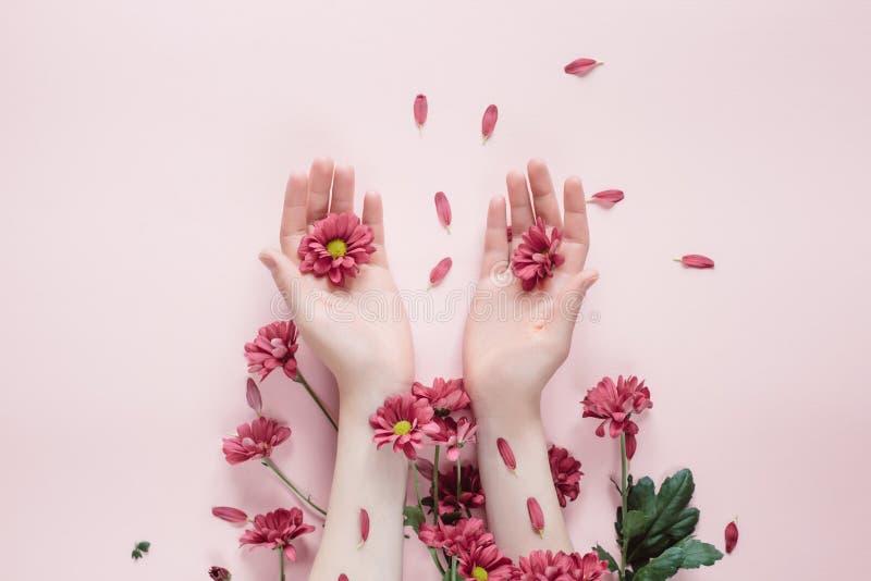 Belles mains femelles en gros plan avec des fleurs de purpure sur le fond rose Cosm?tiques pour l'anti ride de mains photographie stock