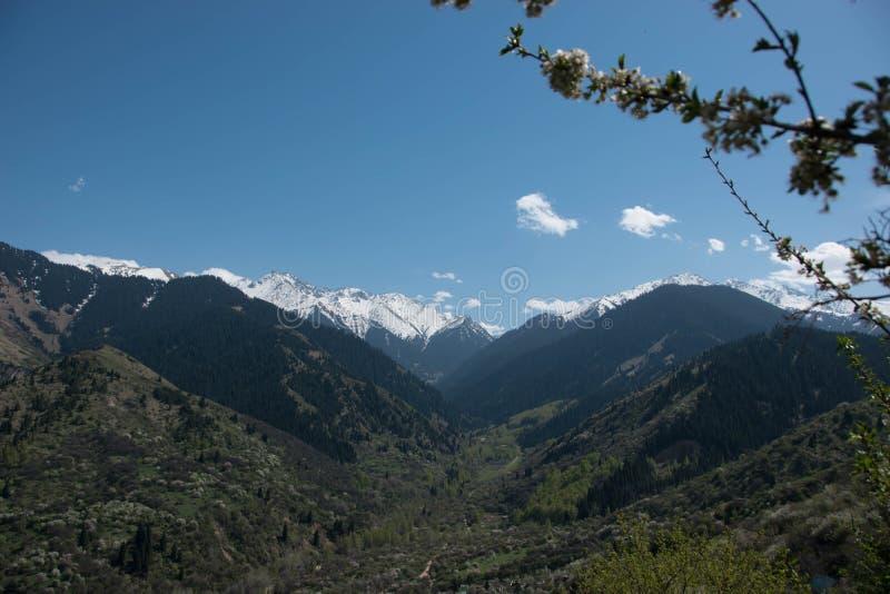 Belles montagnes au printemps, forêts et ciel nuageux photos stock