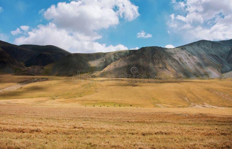 Belles montagnes colorées sous le ciel blanc de nuages et la petite vache au champ d'herbe dans la perspective photo stock