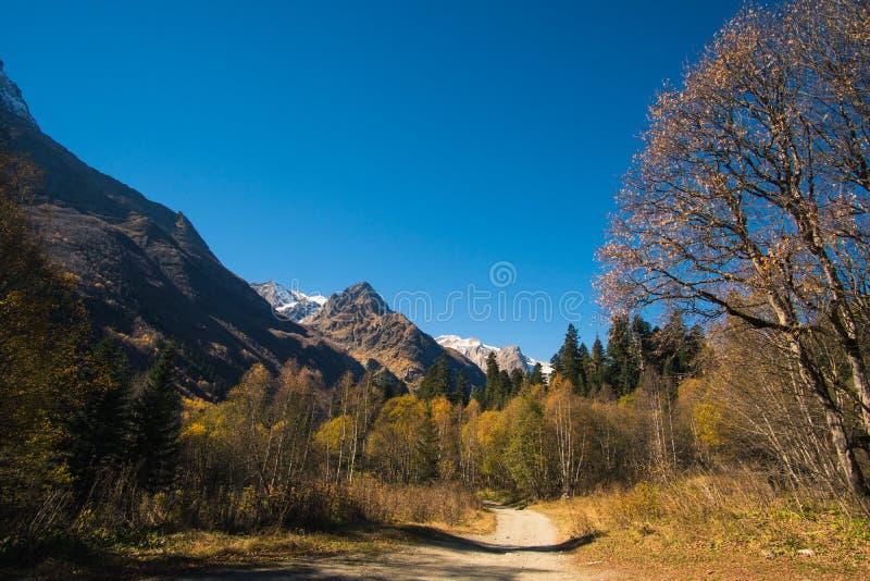 Belles montagnes de paysage avec la forêt et les pins et le ciel bleu images libres de droits