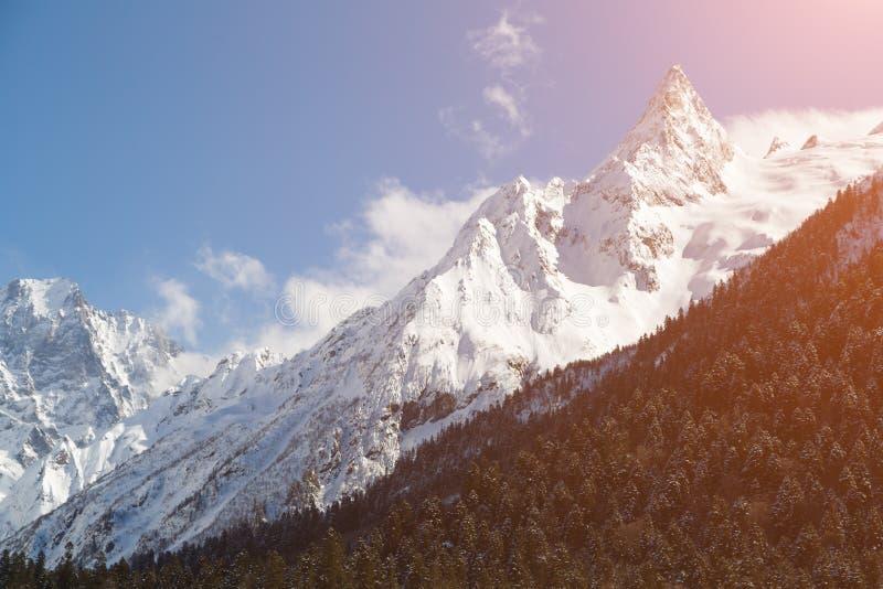 Belles montagnes et pentes caucasiennes couronnées de neige envahies avec la forêt conifére un jour ensoleillé d'hiver photographie stock libre de droits