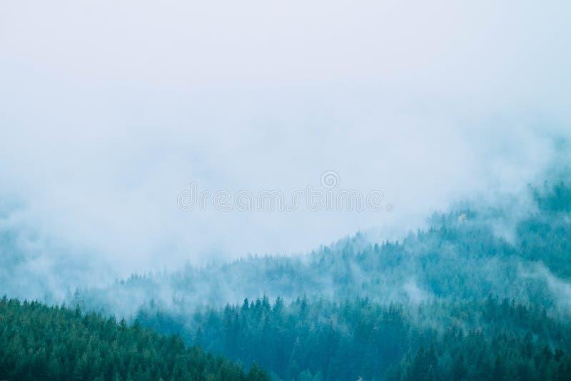 Belles montagnes mystiques brumeuses Nuages de brouillard au pin mon image libre de droits