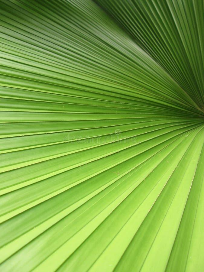 Belles palmettes de plan rapproché d'arbre au soleil image libre de droits