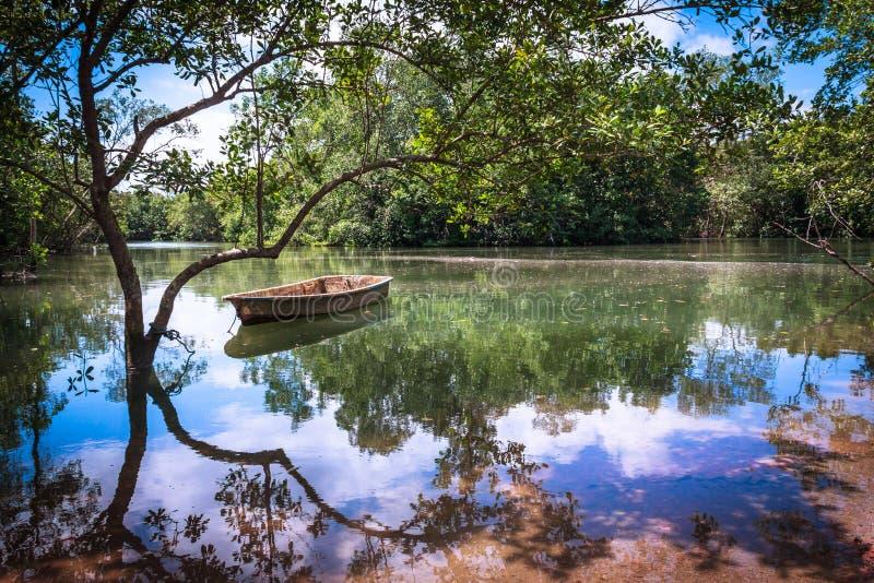 Belles réflexions de l'eau sur un étang paisible dans le paradis photographie stock libre de droits