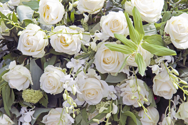 Belles roses blanches image libre de droits
