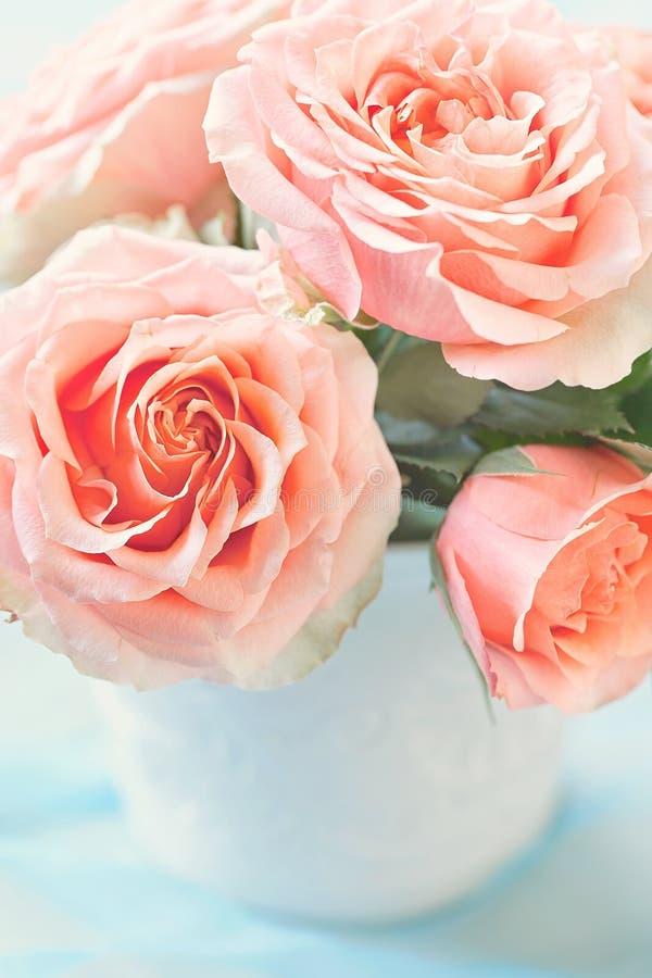 Belles roses fraîches image libre de droits