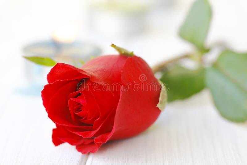 Belles roses rouges sur le plan rapproché de table images stock