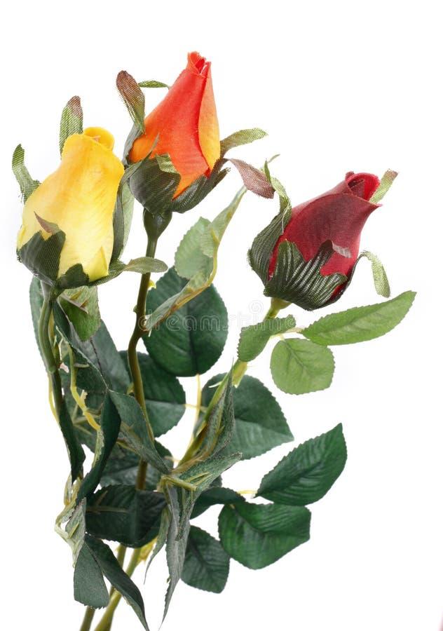Belles roses sur un blanc photographie stock