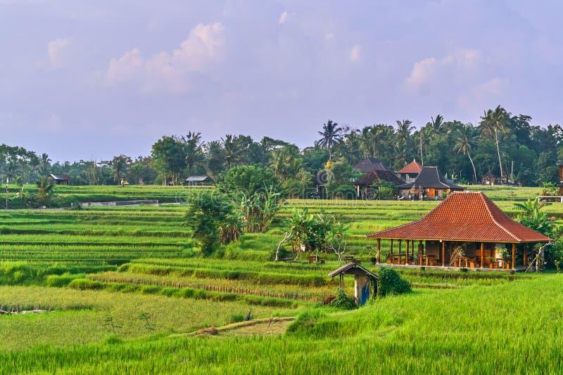 Belles terrasses de riz au coucher du soleil dans Ubud, île de Bali photographie stock libre de droits