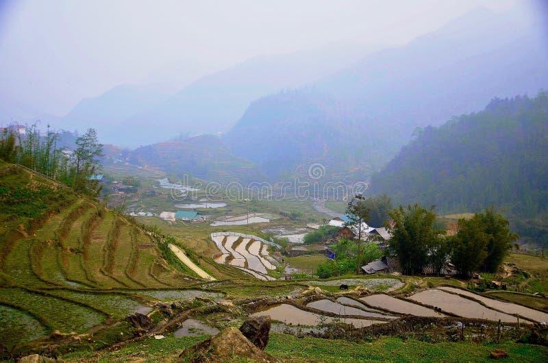 Belles terrasses vertes de riz dans SaPa photo libre de droits