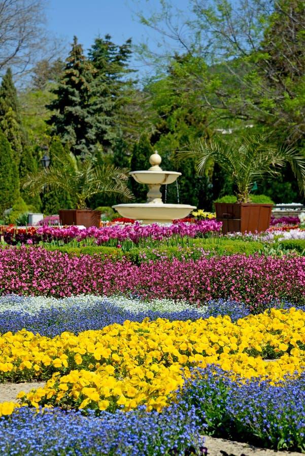 Belles tulipes dans le jardin photos stock