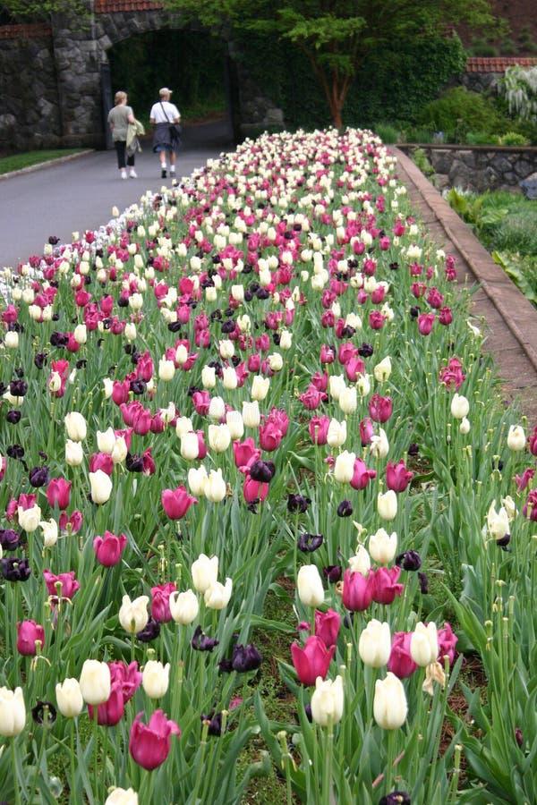 Belles tulipes dans le jardin 2 images stock