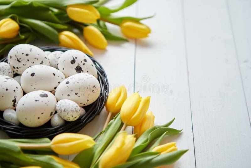 Belles tulipes jaunes avec les cailles et les oeufs pointillés de poulet dans le nid sur le blanc photographie stock