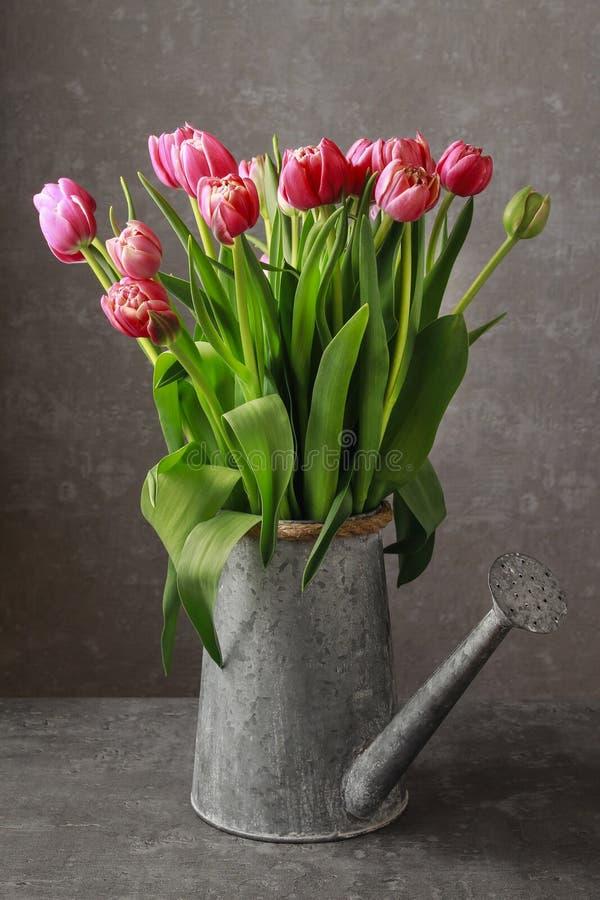 Belles tulipes roses dans la boîte d'arrosage argentée photos stock