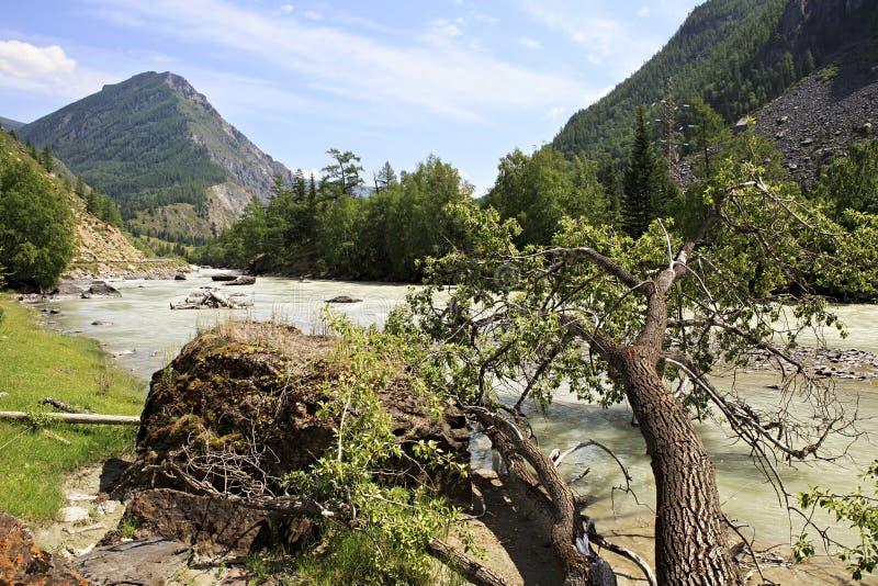Belles vues de rivière Chuya près de Chuysky Trakt photo libre de droits