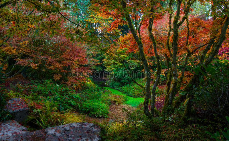 Bellevue Botanical Garden, Washington State royalty free stock images