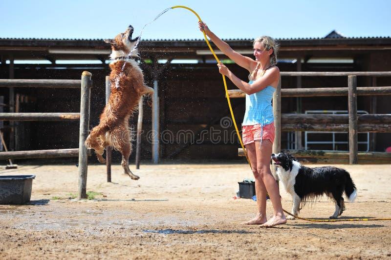 Download Belleza imagen de archivo. Imagen de animal, riding, animales - 42436127