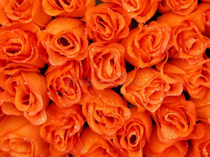 Belleza anaranjada fotos de archivo libres de regalías