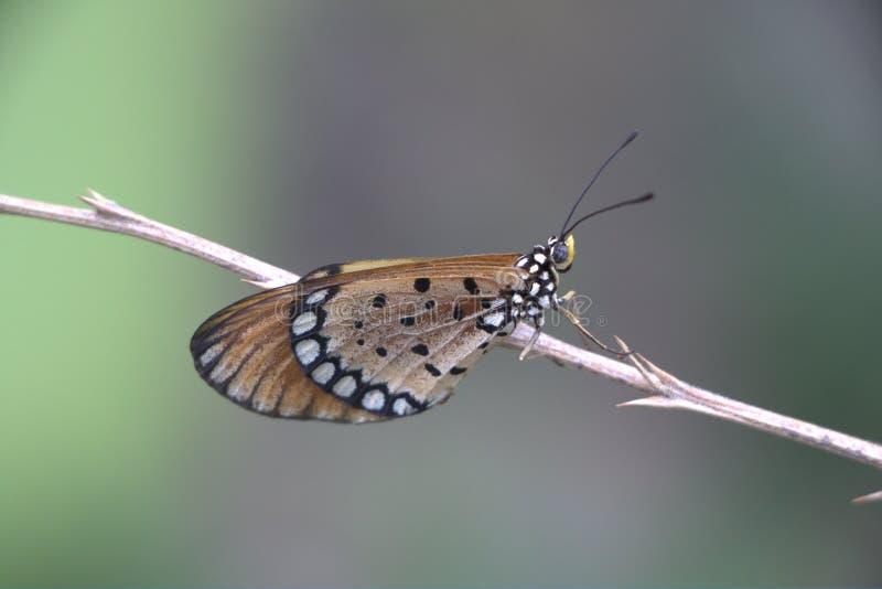 Belleza coa alas imagen de archivo