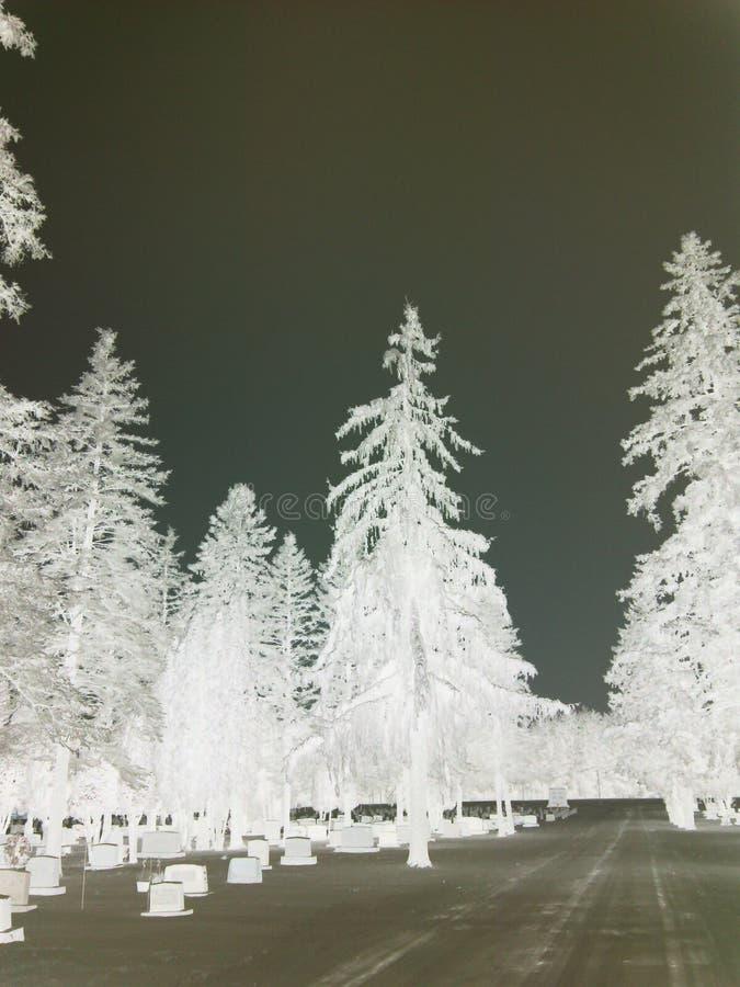 Belleza congelada entre los ángeles foto de archivo