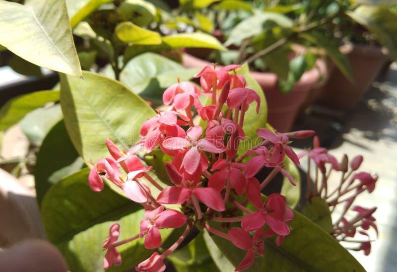 Belleza de flores imagen de archivo
