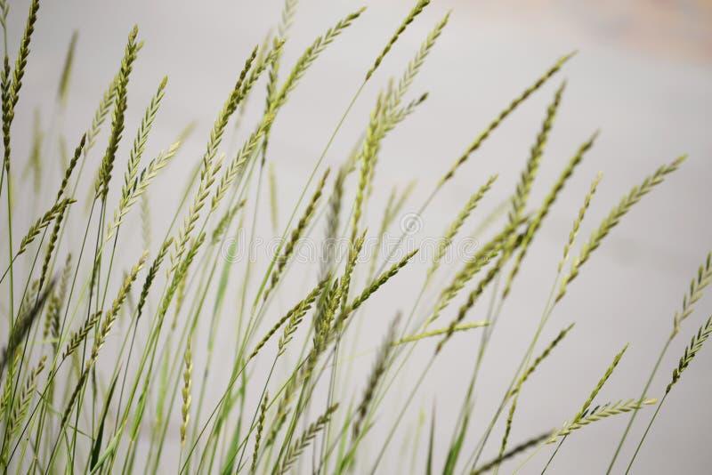Belleza de hojas verdes de la alta hierba en un fondo gris fotos de archivo