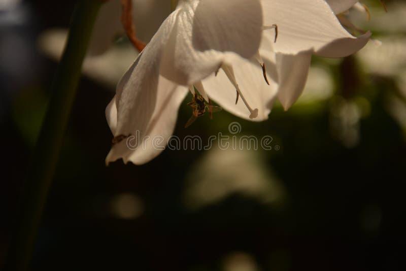 belleza de la flor imagenes de archivo