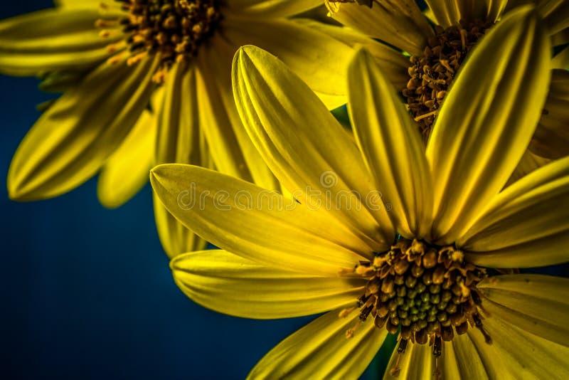 Belleza de la naturaleza foto de archivo libre de regalías