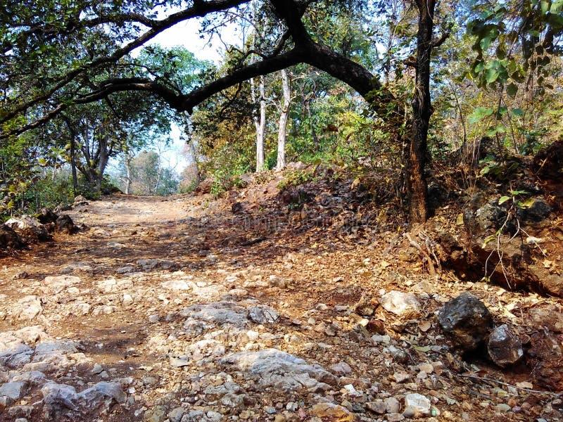 Belleza de la naturaleza del bosque de Satpura fotografía de archivo