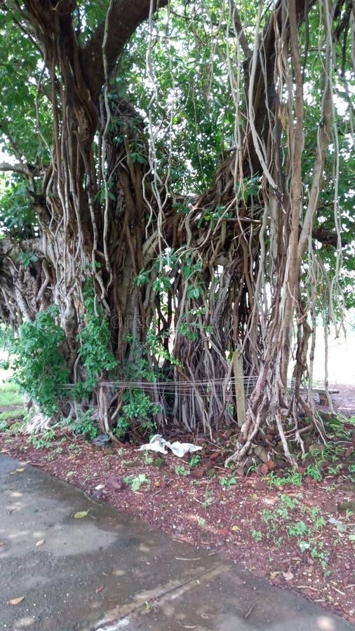 Belleza de las naturalezas con las ramas hermosas imagen de archivo