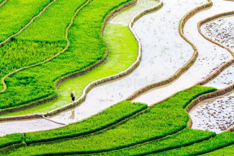 Belleza de los campos colgantes del arroz de la gente étnica de H'Mong en la estación trasnplanting foto de archivo libre de regalías