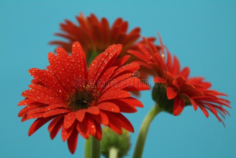 Belleza de una flor imagenes de archivo