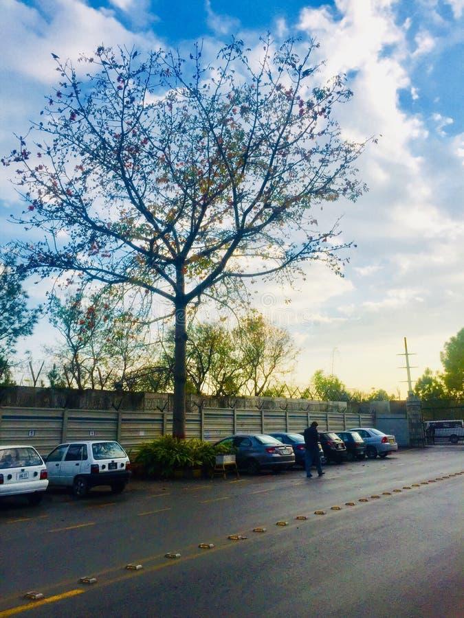 Belleza del árbol de los season's de la primavera fotos de archivo