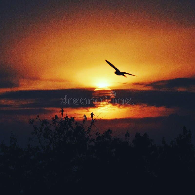 Belleza del ajuste de Sun imágenes de archivo libres de regalías