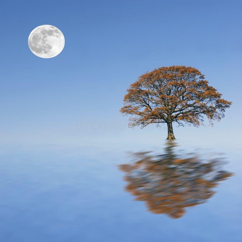 Belleza del crepúsculo del otoño ilustración del vector