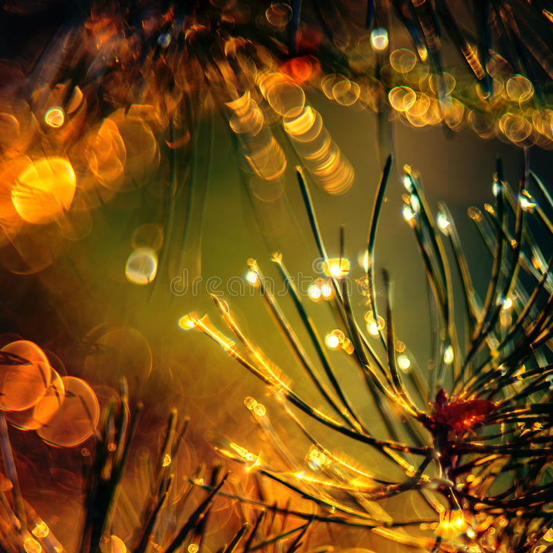 Belleza del detalle de la naturaleza imagen de archivo libre de regalías