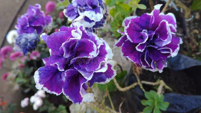 Belleza del jardín fotos de archivo