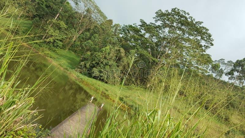 Belleza del país ascendente en Sri Lanka fotos de archivo