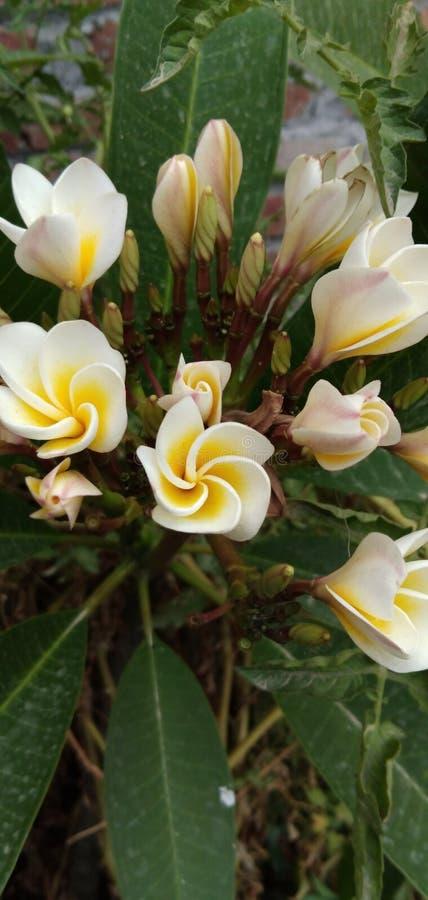 Belleza en estructura de las flores fotos de archivo libres de regalías