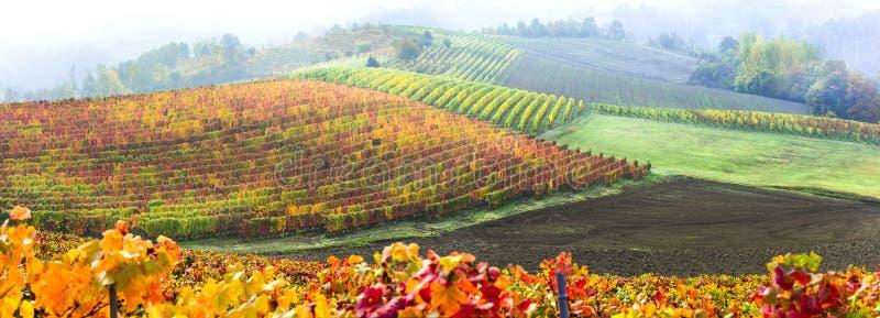 Belleza en la naturaleza - campo de otoño con hileras de coloridos viñedos en Piamonte, al norte de Italia foto de archivo