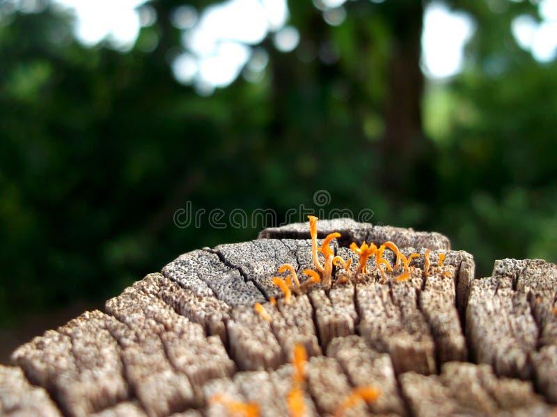 Belleza natural asombrosa La belleza del hongo imagenes de archivo
