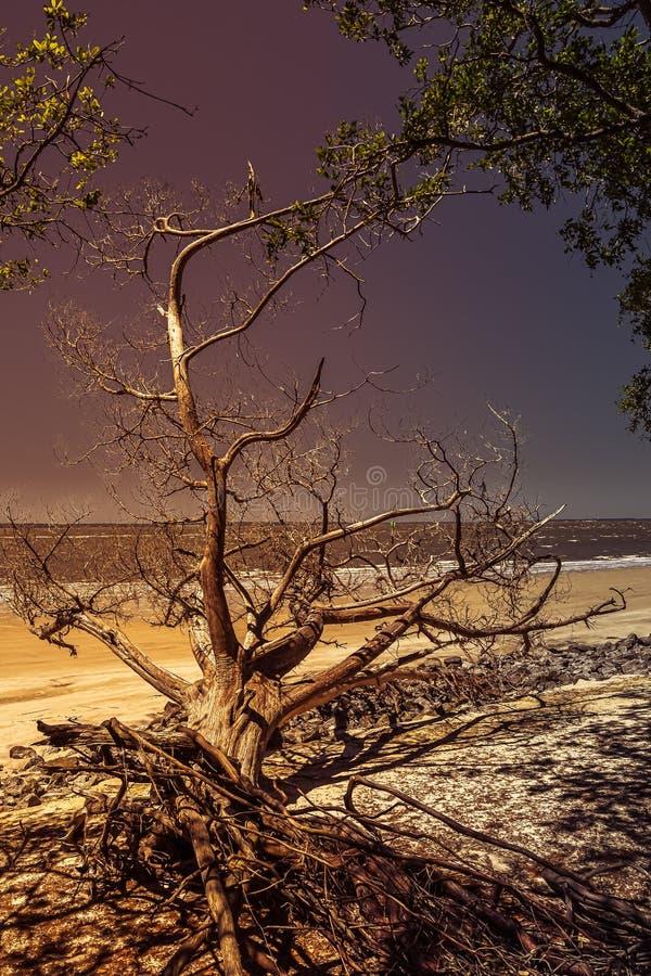 Belleza natural después del huracán imagenes de archivo