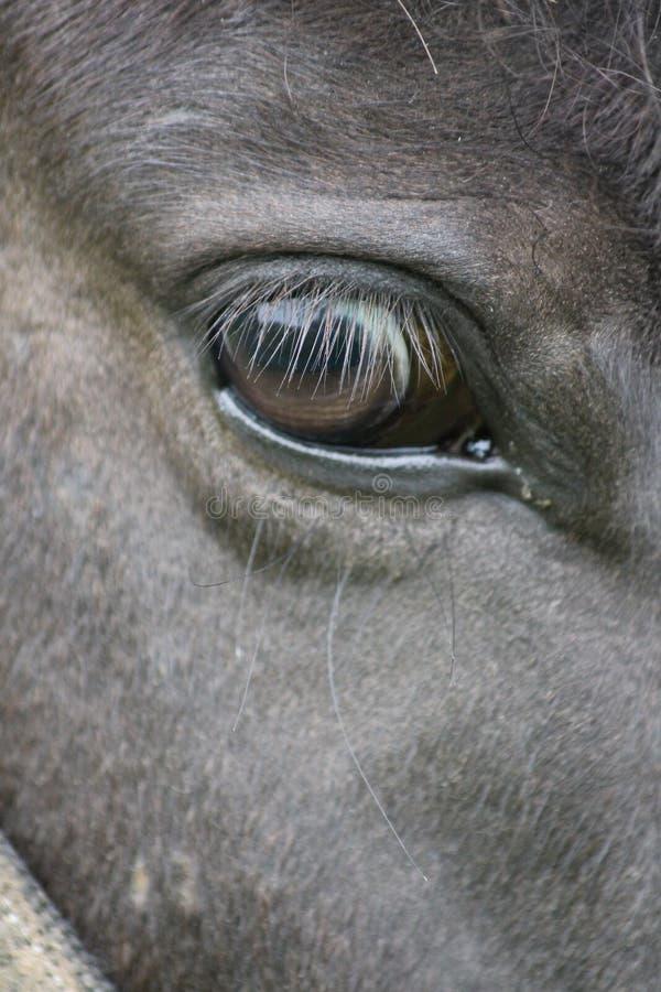 belleza potencia Dom negro reflejo Ojo pets Ansiedad Relájese dreamstime ojo-espejo Amor verdad Caballo caballo-ojo pelo marrón fotos de archivo